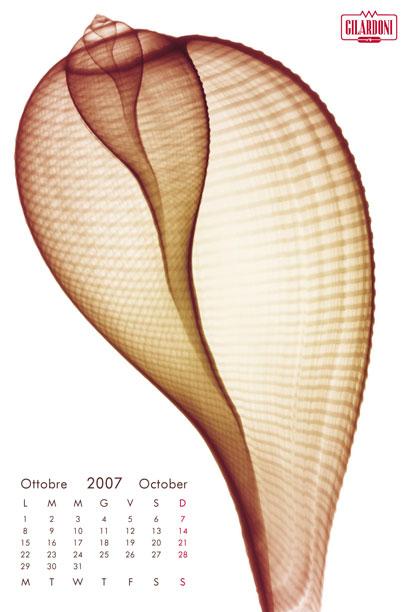 2007f11