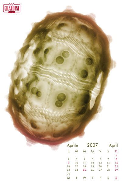 2007f5